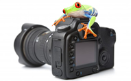 camera_frog