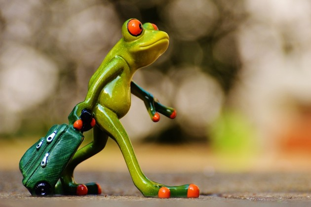 froggyyy