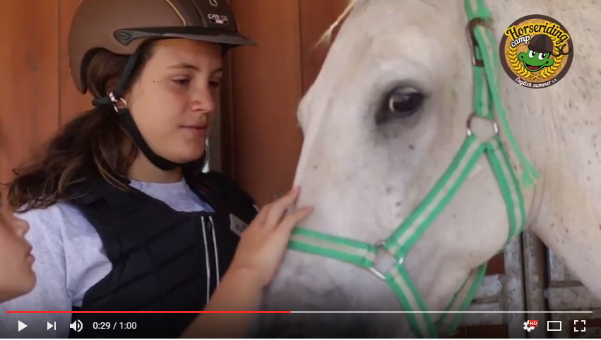 horsevideo